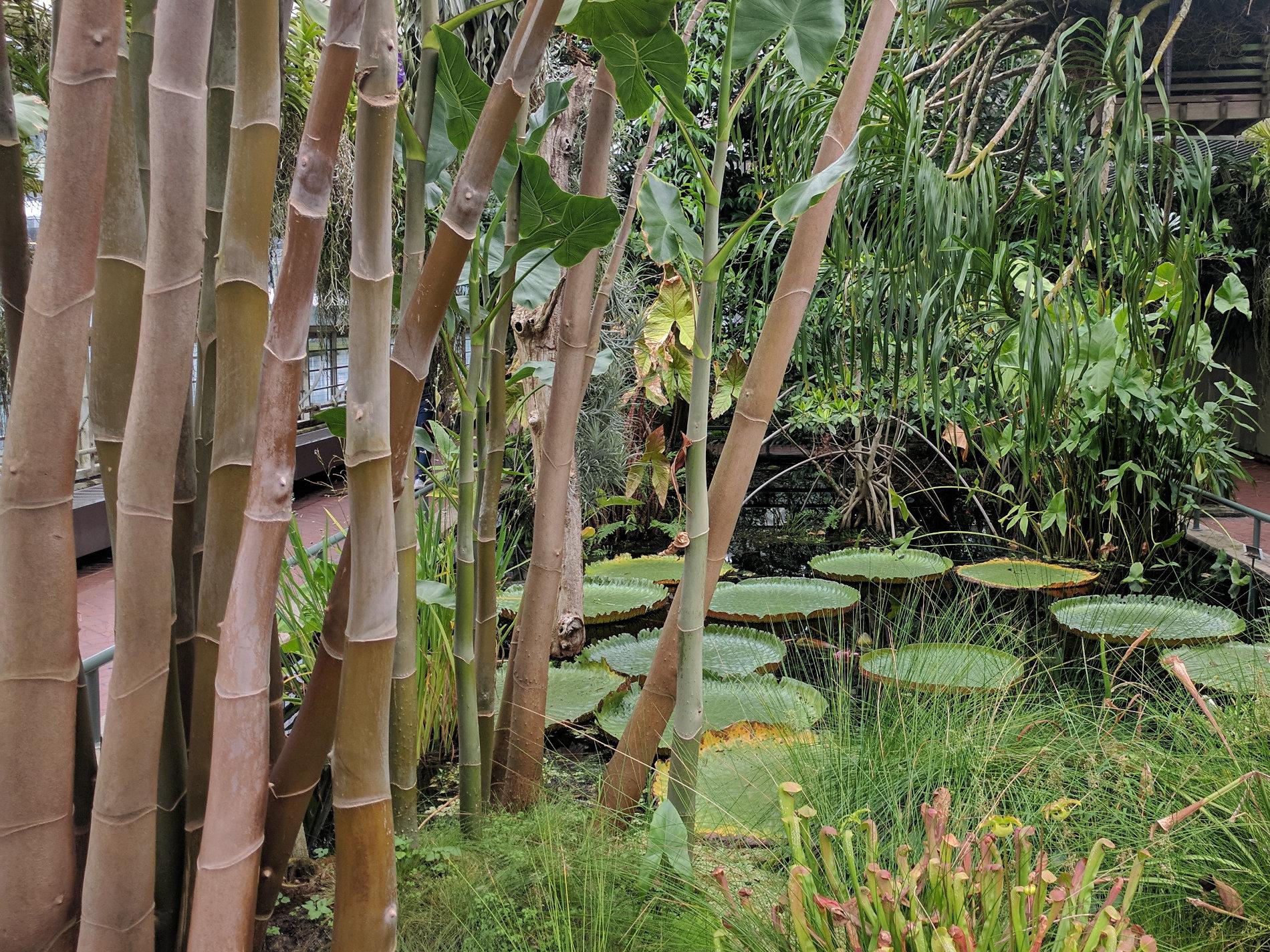 Seerosen und Bambus
