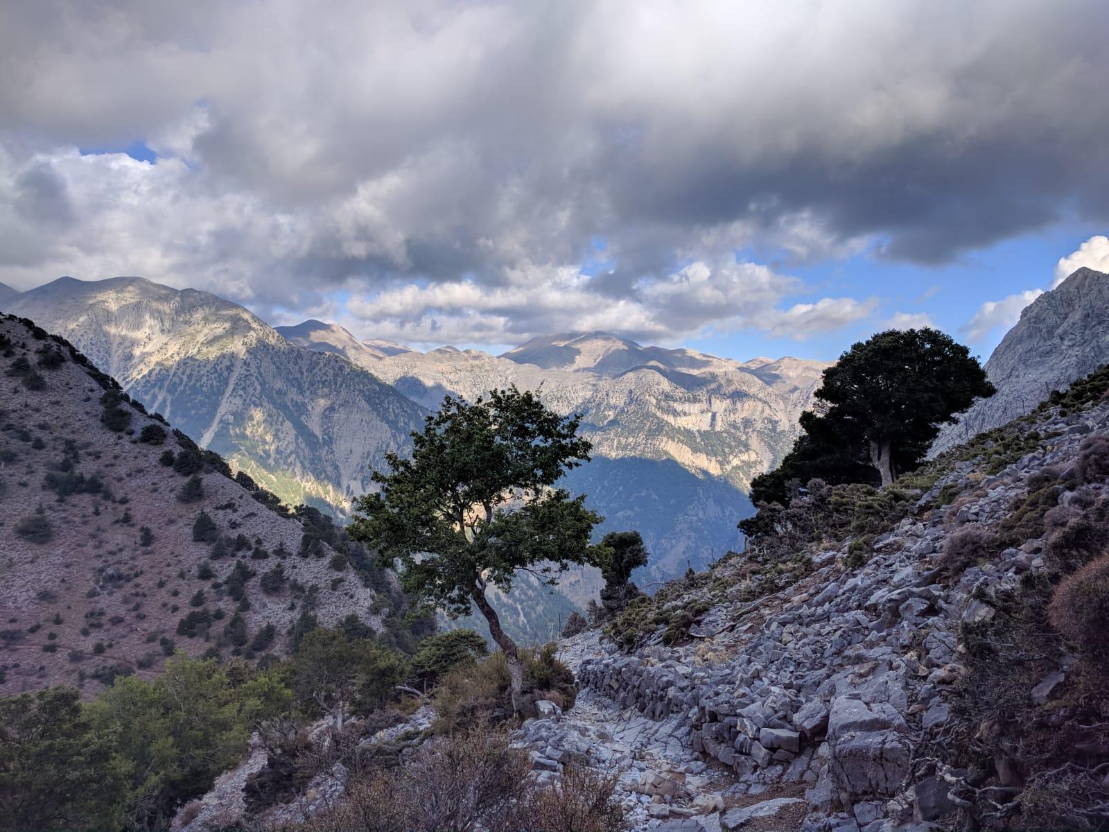 Baum in der Bergen auf Kreta